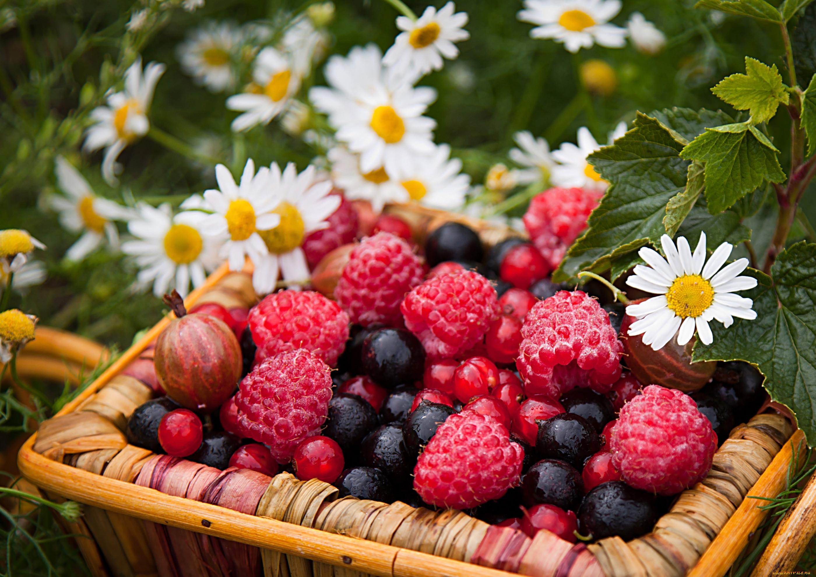 Красивые картинки природы фрукты